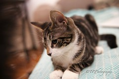 YoungLalo (TRPNYC) Tags: cat pet cute sweet love baby boy portrait dof focus nofilter noedit mew mewmix kitty kitten eos canon 6d 2470mm photography lifestyle lifeisgood beautiful goodvibe peace live free forever