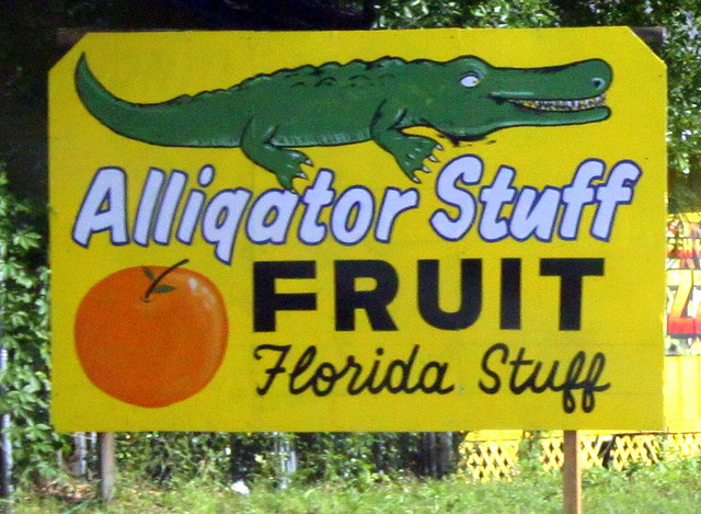 Alligator Stuff