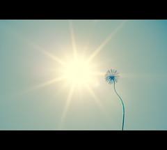 """34/ 50 """"Sommertag = f22"""" (Mirko.Eggert) Tags: deutschland 50mm niedersachsen 50mmproject twittographers nikond7000 hohnstorfelbe"""