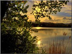 Lago delle Grazie (Luigi Alesi) Tags: sunset italy lake tree reflections lago gold nikon italia tramonto albero riflessi marche grazie tolentino oro macerata delle d90 platinumheartaward