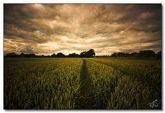 Fields (rjt208) Tags: sky nature countryside canal wildlife fields westmidlands wheatgrass rushall rjt208