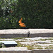 John F Kennedy Grave Site eternal flame - Arlington National Cemetery - 2012-05-19