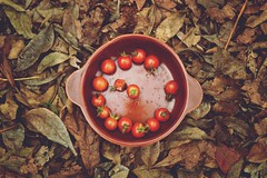 O ste (JavierAndrs) Tags: autumn red brown cup leaves fruit tomato hojas 50mm ro