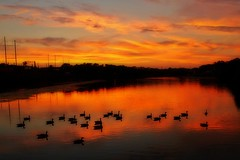 sunset with geese (lucymagoo_images) Tags: park sunset sky urban orange reflection philadelphia nature water birds clouds river geese glow reflected glowing philly fairmount orton schuylkill ortonized lucymagoo lucymagooimages