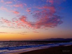 A pelican sunset in Playa del Rey [Explore Front Page] (RobertCross1) Tags: ocean california sunset sea seascape mountains beach water birds clouds landscape atardecer coast la losangeles sand surf waves pacific santamonica pelican malibu socal nubes anochecer puestadelsol playadelrey discoverlosangeles