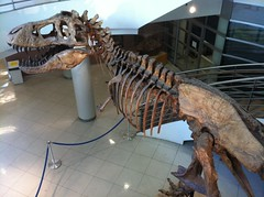 Tyrannosaurus rex at the University of California Museum of Paleontology, UC Berkeley (Dallas Krentzel) Tags: life california school building college feet monster museum stairs tooth campus skeleton fossil skull berkeley big stair university arms dinosaur legs reptile teeth small stairwell paleontology sharp well valley tiny ribs jaws bones huge femur uc process cranium rex biology sciences tyrannosaurus vertebrate tyrannosaurusrex vertebrae pelis mandible tyrannosaur transverse theropod pubis tyrannosauridae saurischia coelurosauria sacrum universityofcaliforniaberkeley forelegs integrative saurischian ischium forelimbs archosaur universityofcaliforniamuseumofpaleontology valleylifesciencesbuilding tiranossauro iphonography coelurosaur tyrannosauroidea ucmp diapsid iphoneography tyrannosauroid tyrannosaurida tyrannosauria ornitodira