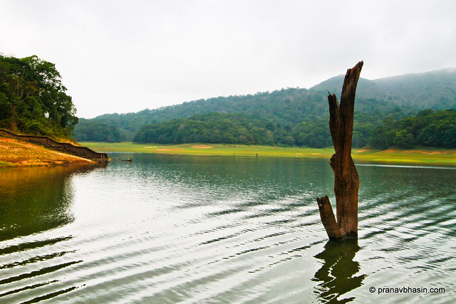 Ripples In The Water At Periyar Tiger Reserve, Thekkady