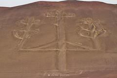 El candelabro (Vctor Bautista) Tags: naturaleza peru duna montaa roca desconocido suelo misterio tierra seales candelabro arcilla mistico
