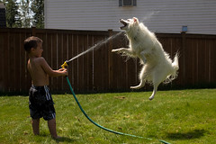 The Shot (--- Andy Orozco ---) Tags: summer dog water canon fun kid action hose americaneskimo eskie 60d canon60d