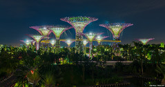 Gardens by the Bay (Jake Wang) Tags: gardens by night marina landscape bay singapore grove sands bayfront the supertree