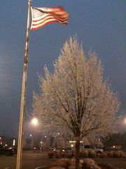 frosty morning (MissMary49) Tags: cold tree ice americanflag wintermorning pariotic