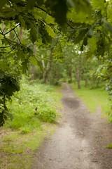 Wimbledon Common Path (menickstephensorg) Tags: green london common wimbledon canonef2470mmf28lusm sw19 wombles canoneos5dmk2