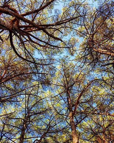 Profumo di Maremma 🌳🌳🌳 #nature #TagsForLikes #sky #sun #summer #beach #beautiful #pretty #sunset #sunrise #blue #flowers #night #tree #twilight #clouds #beauty #light #cloudporn #photooftheday #love #green #sky