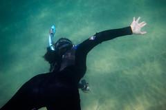 _DSC1019 (andrewlorenzlong) Tags: california laguna beach lagunabeach pacific ocean pacificocean snorkel snorkeling stingray sting ray rays stingrays leopard leopardray leopardrays thornback thornbackray sam