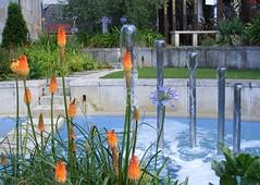 Mandela gardens (leedslily) Tags: leeds millennium square mandela gardens fountain water plant flower tree shrub grass redhotpoker