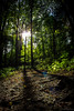 Time of Reflection (SerpaDesign) Tags: trees light bright forest ground floor sticks nature natural shadows tannerserpa serpadesign