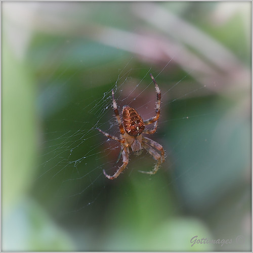 SPIDER AND WEB by Philip Gott