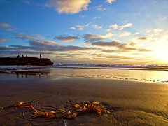 Washed Ashore (isaacullah) Tags: torrey pines sunset light california san diego nature beach samyang ocean water rocks colors wide hiking angle olympus views