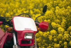 L1008462c (haru__q) Tags: leica m8 leitz summicron field mustard  honda crm250r motorcycle 2st