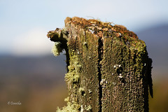 Campo 204 (Constanza Romero L.) Tags: sony alpha chile gorbea sonyflickraward winter invierno nature naturaleza paisaje landscape macro musgo moss