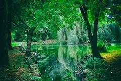 Mystic Pond (Michael Eickelmann) Tags: mystic mystisch pond teich landscape landschaft trees bäume water wasser nature natur bad rothenfelde kahnteich weeping willow trauerweide panasonic lumix fz 200