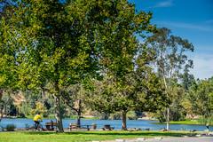 Los Gatos Creek Trail (randyherring) Tags: recreational nature water outdoor lake trees vasonalakecountypark geese california santaclaracountyparks ca losgatos afternoon sky park canadagoose losgatoscreektrail grass brantacanadensis unitedstates us