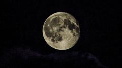 P1020627 (seanhigson) Tags: moon stars night sky fz200