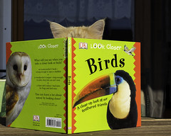 Birds - a close-up look at our feathered friends (FocusPocus Photography) Tags: linus katze kater cat chat gato feline tier animal haustier pet birds vgel liest reading leser reader bcherwurm bookworm buch book gefiedertefreunde featheredfriends
