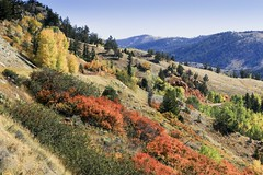 Fall color (f/Kat) Tags: gtnp grandtetonnationalpark wyoming autumn fall aspen reflections