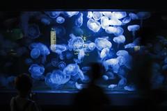Berlin Aquarium (Gianluca De Simone) Tags: aquarium berlin acquario water acqua medusa meduse jellyfish silouette effetto effect mosso blur blu blue black white people child bambino