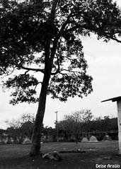 Wasted (Deise Arajo) Tags: blackandwhite bw man tree nature field drunk landscape natureza pb paisagem hangover campo moa gameover rvore homem bbado pretoebranco maranho solus fimdejogo metalopenair ressava
