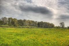 Mayday = Spring Start (blavandmaster) Tags: blue trees light sky green grass yellow clouds landscape countryside spring 1st may owl nrw hdr rapeseed westfalen ostwestfalen diebrock