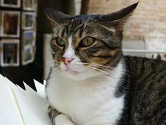 I gatti sono ornamenti viventi (France53  . . . u t i n a m . . .) Tags: venice cats cat venezia gatto gatti libreriaacquaalta acquaaltabookshop ornamentiviventi livingadornments edwinlent