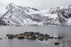 morfjorden - lofoten - norway - 01 (hors-saison) Tags: snow norway islands norge norwegen noruega lofoten norvegia norvege nauy noorwegen iles norvge norja  noregur  norwegia norveka  noorwe