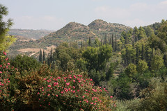 Hills and flowers (ejhrap) Tags: flowers tree landscape hill foliage greece olympia
