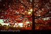 Autumn evening (mukunkanap) Tags: road street blue autumn panorama house mountain holiday toronto ontario canada mountains color colour tree fall wet rain fog corner canon fence garden season gate track mt bright fallcolors pano cottage autumncolors mount trail hedge wilson aussie canopy soe colorsoffall 500d colorsofautumn supershot mywinners abigfave fallintoronto anawesomeshot frhwofavs wardenwoodpark