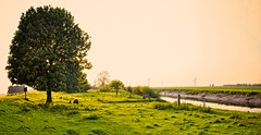 A Perfect Scene (Ryan J. Nicholson) Tags: trees sunset two nature water grass river gold golden countryside cow town photo high village dynamic wind photos wildlife yorkshire bank east full riding frame land stitching farms grasses effect ouse range hdr feilds goole airmyn