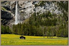 _FDA7222 Spring in the mountains (fd_alsaker) Tags: htte wiese kandersteg landschaft frhling lwenzahn waserfall