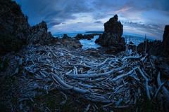 Bare bones (Ian@NZFlickr) Tags: wood west me sunrise island dawn bay bravo north nz wellington behind facing titahi drfit