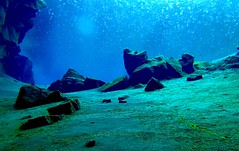 Diving Silfra 7