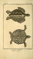 n49_w1150 (BioDivLibrary) Tags: evolution anatomy reptiles smithsonianinstitutionlibraries pictorialworks bhl:page=39967662 dc:identifier=httpbiodiversitylibraryorgpage39967662