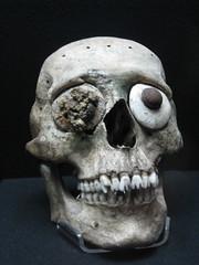 Skull Effigy (Plant Design Online) Tags: teeth filing