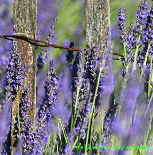 The world 39 s best photos of floral and lavanda flickr for Jarden france