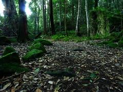 Leura Forest (Trent B Clark) Tags: trees green nature leaves rock stone moss track natural path australia boulder nsw verdant bushwalk leura