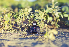 Green camera (190/365) (fazz33 (Chris)) Tags: camera brown green film canon photography f14 flash 85mm micro vegetation growing 35 hanimex rokinon bokerama