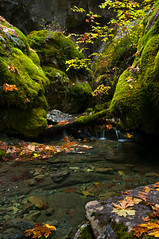 Natural Land Bridge (Eric Leslie) Tags: california ca autumn usa leaves rock creek landscape moss unitedstates massacre indian limestone peanut nativeamericans hayfork naturallandbridge wintu