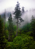 Somewhere in the Cascades (h_roach) Tags: trees mountains vertical fog clouds forest outdoors woods explore cascades wilderness myst natureselegantshots coppercloudsilvernsun