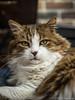 Stolze Katze 30.07.2012