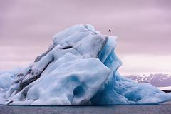 Hielos eternos de Islandia (Ricardo Martinez Fotografia) Tags: d810 europa nikon ricardomartinez glaciar vatnajkull jkulsrln iceland islandia hielo ice glacier