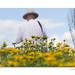Summertime+at+Sussex+Prairie+Garden+-+7+%28Explored%29
